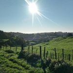 Picture of Waitomo landscape
