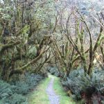 Image of Fiordland's cold rainforest